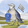 Bird Race - The remake! Image