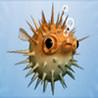 A Buoyancy Fish Image