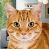A Pet Cat HD Image