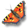 iButterfly Image