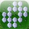 a White Rose Peg ! Image