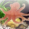Ask to the Octopus Image