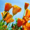 TurnPuzz - Flowers Image