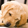 Cutie Scratch -Dogs- Image