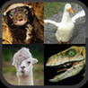 Llama or Duck or Honey Badger or Raptor? Image