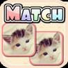 Cute Kitten Match HD Image