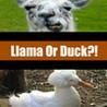 Llama Or Duck?! Image
