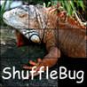 ShuffleBug Image