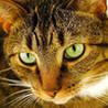 Cat Puzzles Image