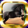 Horse Gallop Image