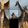 Safari Sliders Image
