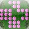 a Pink Rose Peg ! Image
