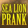 A Sea Lion Prank Image