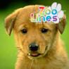 Zoo Lines Image