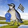 Bird Race Image
