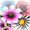Flowerpatch Image