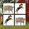Memorize Farm Image