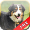Dogs Puzzle HD.. Image