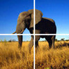 Animal Puzzle: Worldwide Image