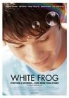 White Frog Image