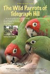 The Wild Parrots of Telegraph Hill Image