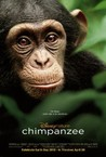 Chimpanzee Image