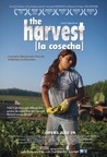 The Harvest/La Cosecha Image