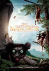 Island of Lemurs: Madagascar Image