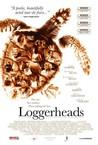 Loggerheads Image