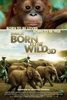Born to Be Wild Image