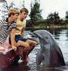 Flipper (1964) Image