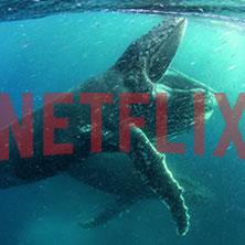 Netflix's April Lineup