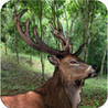 Deer Hunting Animals Jungle Image