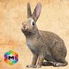 Rabbit Simulator Image