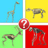 Animals by Skeleton Trivia - Guess the Creature Image