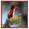 Picture Quiz : Birds Image