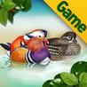 Birds of Korea Game Image