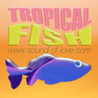 Tropical Fish Touch Image