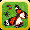ibutterfly HD Image