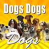 Dogs Dogs Dogs Image