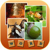 1 Pic 1 Word Quiz - Guess Words Image