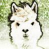 Running Alpaca Image